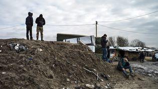 Des migrants dans la jungle de Calais, le 23 février 2016. (MAXPPP)