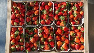 """Plus de 200 cas présumés de """"fraises piégées"""" ont été signalés en Australie dès septembre 2018. (SILAS STEIN / DPA / AFP)"""
