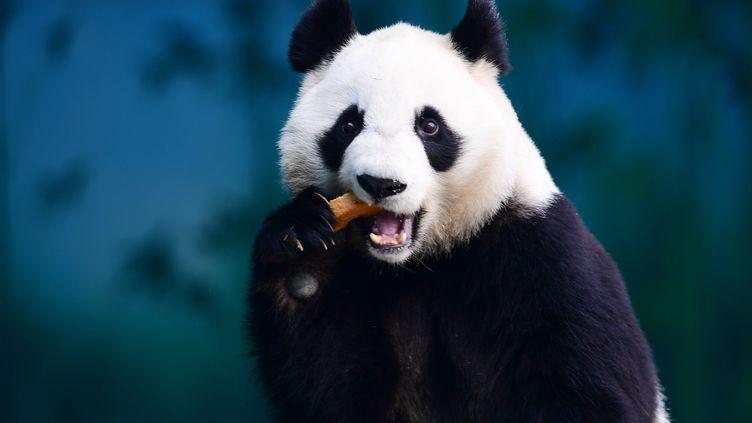 Un panda dans le zoo de Shenyang (Chine), le 20 décembre 2017. (AFP)
