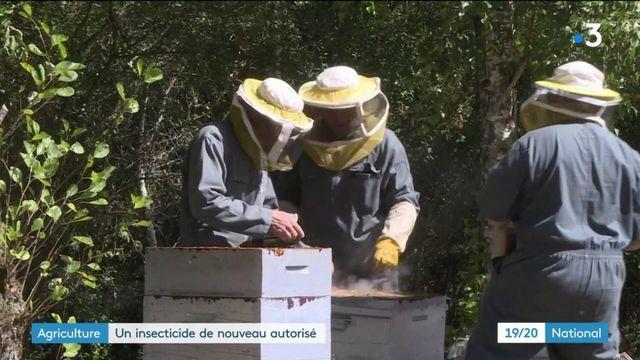 Agriculture : un insecticide de nouveau autorisé