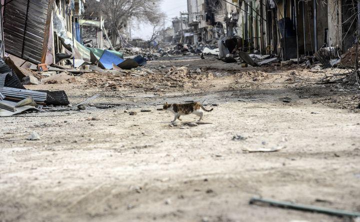 Un chat erre dans les rues de Kobani (Syrie), le 28 janvier 2015. (BULENT KILIC / AFP)