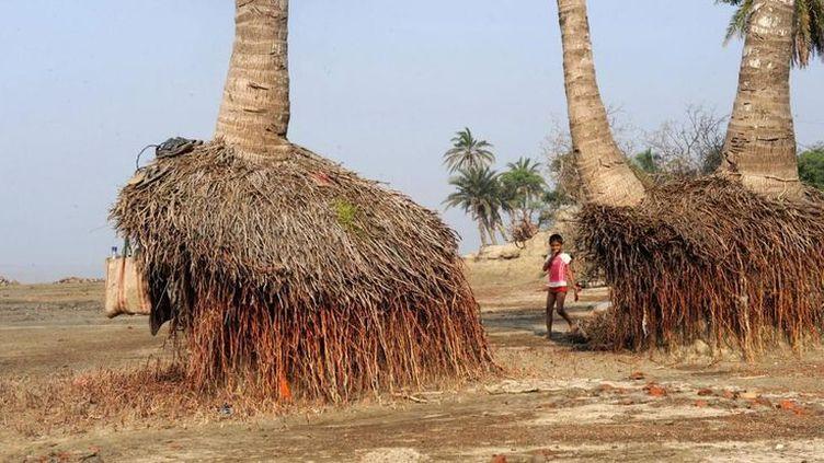 Des palmiers «suspendus» paysage désormais courant sur l'île de Ghoramara, attaquée par les flots. (Barbara Calhoun)