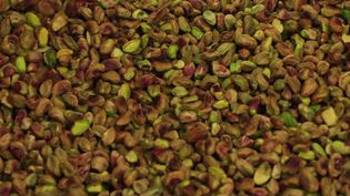 Les pistaches que nous mangeons viennent essentiellement desÉtats-Unis ou d'Espagne. Mais des agriculteurs du Vaucluse ont décidé de réintroduire cet arbuste méditerranéen, peu gourmand en eau. (CAPTURE ECRAN FRANCE 3)