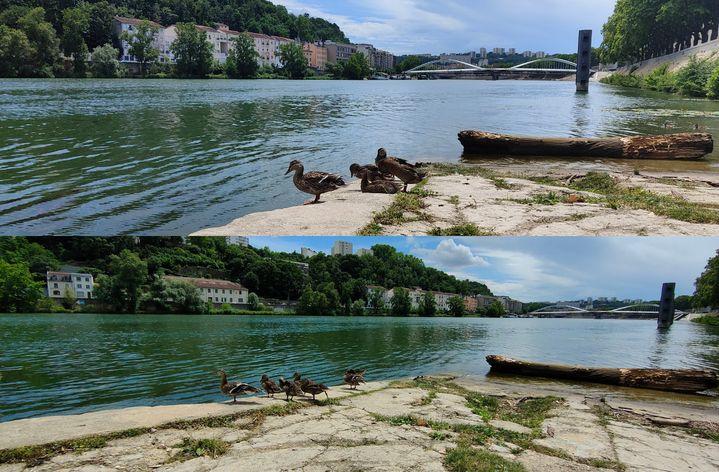 De haut en bas : photos prises avec le Oppo Find X3 Neo avecle capteur principal et ultra grand angle. (Faustine Mazereeuw)