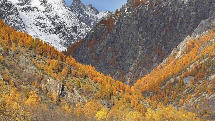 L'Ailefroide Occidentale, qui culmine à plus de 3 900 mètres d'altitude à cheval entre l'Isère et les Hautes-Alpes. (W. PATTYN / BLICKWINKEL)