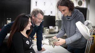 """Des chercheurs du Canterbury Museum, Vanesa De Pietri (g), Paul Scofield (c) et Gerald Mayr (d)étudient des restes fossilisés de """"crossvallia waiparensis"""", une espèce de pingouin qui a vécu au large de la côte néozélandaise à l'époque paléocène, il y a 66-56 millions d'années, le 14 août 2019. (JOHANNES VAN KAN / CANTERBURY MUSEUM / AFP)"""
