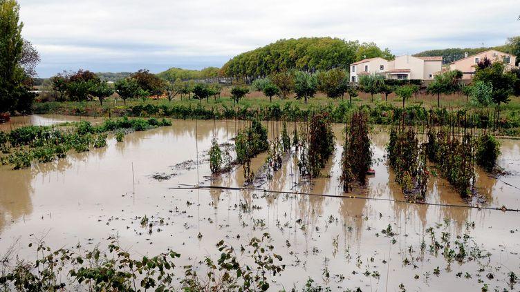 Des vignes inondées près de Béziers (Hérault), le 29 septembre 2014. (  MAXPPP)