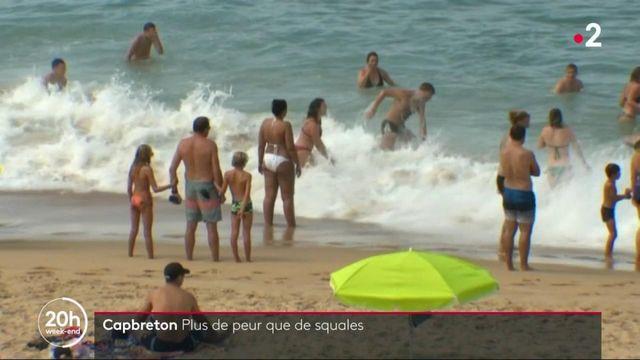 Capbreton : un requin surpris au milieu des baigneurs