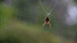 Une araignée et sa toile. Photo d'illustration. (CLAUDE PRIGENT / MAXPPP)