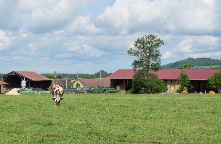 L'exploitation de la famille Verger, avec les hangars en arrière plan, dispose de 80 hectares de prairies et de 70 hectares en culture. (MARIE-VIOLETTE BERNARD / FRANCETV INFO)