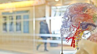 Un neurochirurgien affirme avoir réussi une greffe de tête