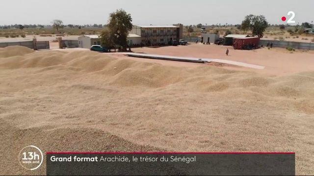 Sénégal : l'arachide victime de son succès