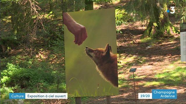 """""""les sentiers de la photo"""", une exposition à ciel ouvert dans les Vosges"""