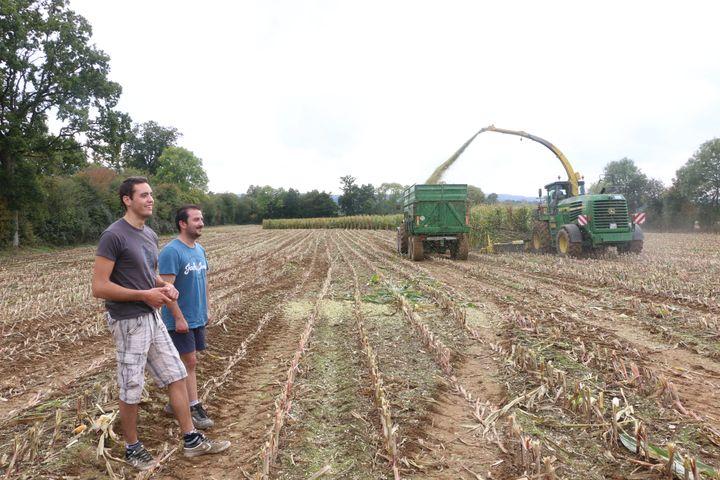 Florent Leportier et Côme Delaunay, devant un chantier d'ensilage dans un champ de maïs, à Faverolles (Orne), le 27 septembre 2017. (VALENTINE PASQUESOONE / FRANCEINFO)