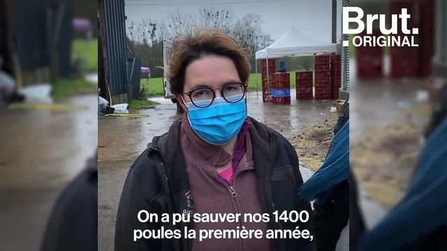 """À Meillac, en Bretagne, l'initiative """"Poule pour tous"""" vend à des particuliers des poules pondeuses initialement destinées à l'abattoir. Voilà comment ça se passe."""