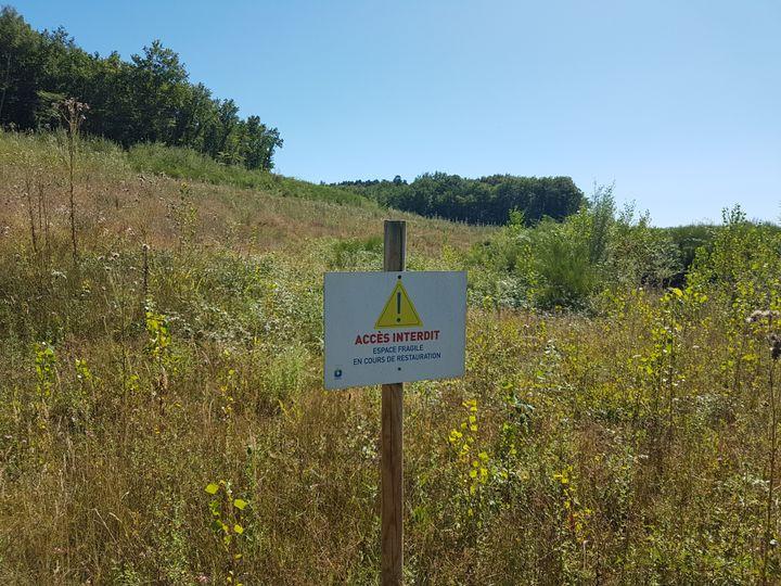 La végétation reprend peu à peu ses droits sur la zone humide du Testet. (ILAN CARO / FRANCEINFO.FR)