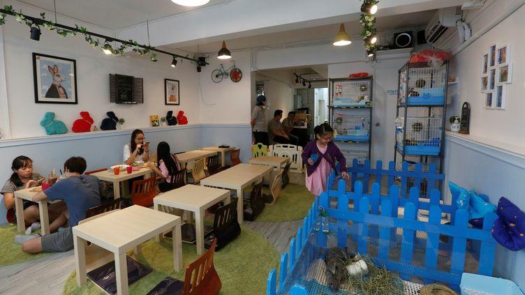 Lecafe à lapins de Hong Kong (Chine), le 25 août 2016. (BOBBY YIP / REUTERS)
