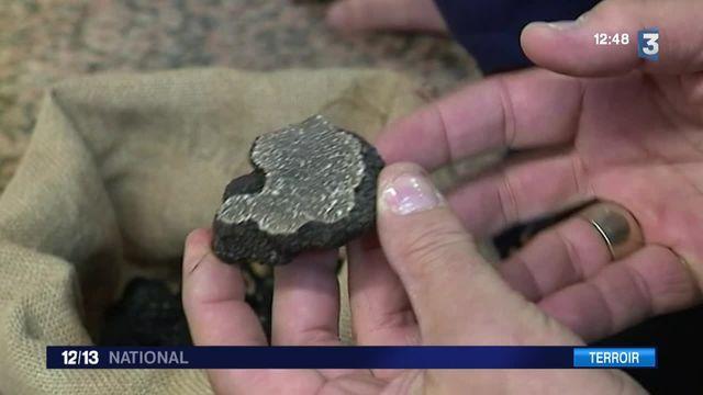 Les truffes font le succès du marché de Carpentras