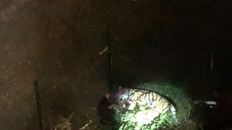 Le tigre qui s'est échappé du cirque Bormann a été abattuà quelques centaines de mètres de là, dans le 15e arrondissement de Paris, le 24 novembre 2017. (RALPH HIPPOCRATE / FRANCE INFO)