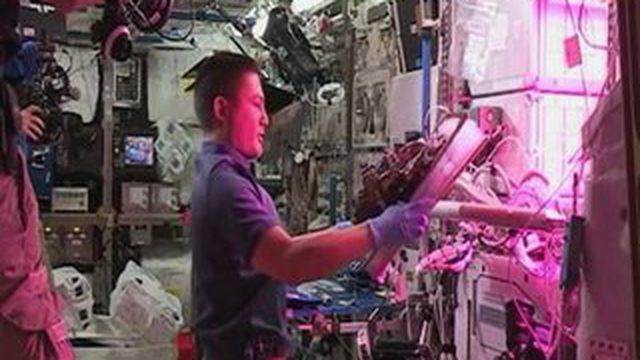 Des astronautes dégustent la première laitue cultivée dans l'espace