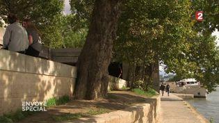 """""""Envoyé spécial"""". Un platane parisien centenaire au secours d'un congénère (FRANCE 2 / FRANCETV INFO)"""