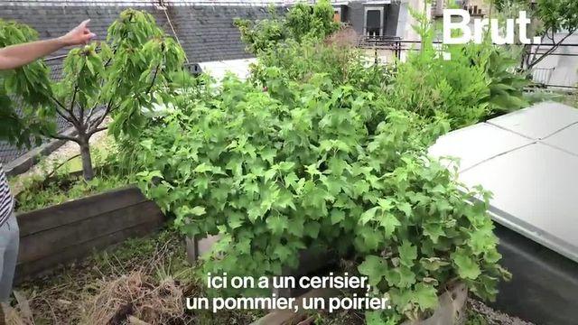 Une ferme à Paris ? Des chercheurs d'Agroparistech nous prouvent que c'est possible. Et plein de bénéfices.
