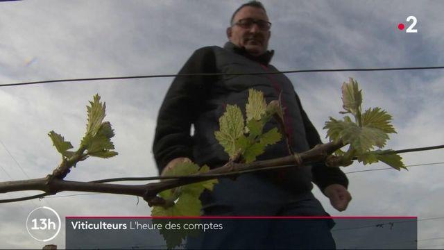 Vague de gel : l'heure du bilan pour les viticulteurs
