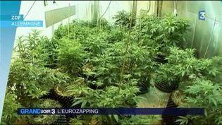 Le cannabis à usage thérapeutique est légalisé en Allemagne. (FRANCE 3)