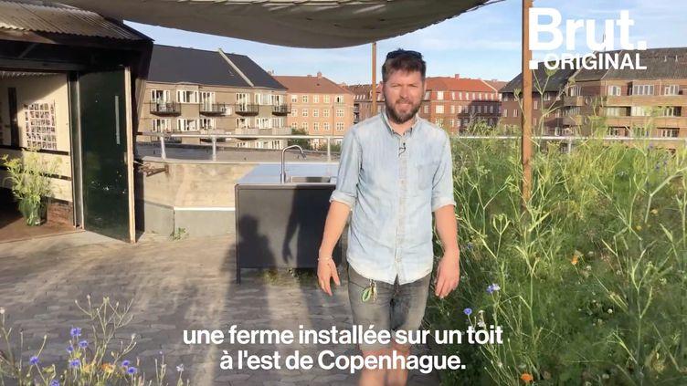 VIDEO. ØsterGRO, un restaurant et une ferme sur un toit danois (BRUT)