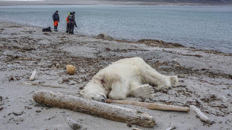 L'ours poliaire abattu après avoir attaqué un homme dans l'Arctique, le 28 juillet 2018. (GUSTAV BUSCH ARNTSEN / NTB SCANPIX / AFP)