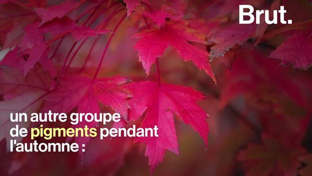 Ça arrive chaque automne : elles changent de couleur et finissent par tomber. Voici pourquoi les arbres se débarrassent de leurs feuilles.