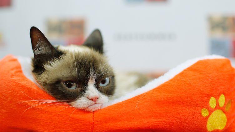 Grumpy cat, le 15 juillet 2014 à New-York, aux Etats-Unis. (JEMAL COUNTESS / GETTY IMAGES NORTH AMERICA / AFP)