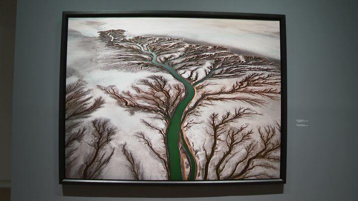 Ceci n'est pas une toile représentant un arbre... Mais bien une photographie d'Edward Burtynsky. (France 3 Occitanie)