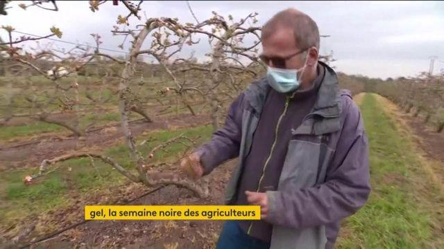Gel : le régime de calamité agricole a été déclenché
