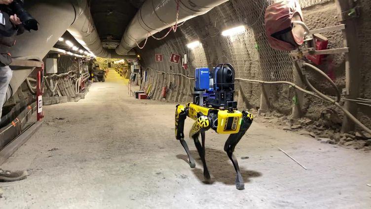 SCAR, le robot-chien de l'école des Mines de Nancy. (CAPTURE D'ÉCRAN FRANCE 3)
