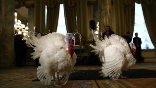 Les traditionnelles dindes de Thanksgiving à la Maison Blanche, le 22 novembre 2016. (WIN MCNAMEE / GETTY IMAGES NORTH AMERICA)