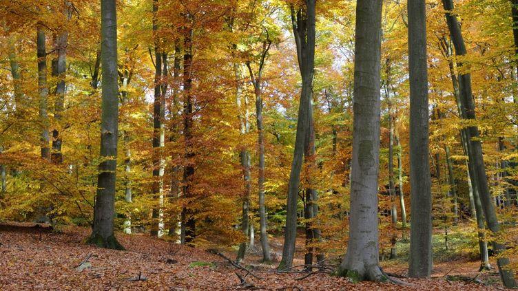 La forêt de Retz (Aisne), où a été retrouvé le corps d'Elisa Pilarski, photographiée le 16 mai 2012. (ANNE MONTFORT / PHOTONONSTOP)