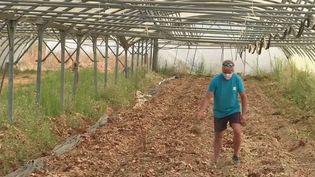 L'exploitation bio d'un couple d'agriculteurs des Bouches-du-Rhone a été saccagée il y a un mois. Environ 2 000 mètres carrés de serres ont été détruits par du glyphosate. (France 2)