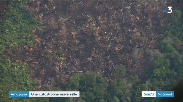 Amazonie : une catastrophe universelle