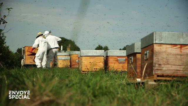 """Envoyé spécial. """"Mes ruches sont pleines de pesticides, mes abeilles crèvent !"""" : la détresse des apiculteurs"""