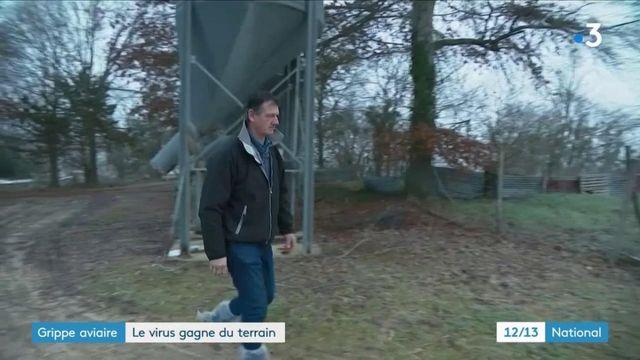 Grippe aviaire : épidémie hors de contrôle dans le sud-ouest