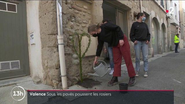 Valence : les habitants et la mairie font équipe pour végétaliser la ville