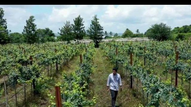 Inde : un pays à la conquête du vin