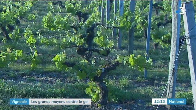 Gironde : les vignerons combattent le gel pour sauver les récoltes