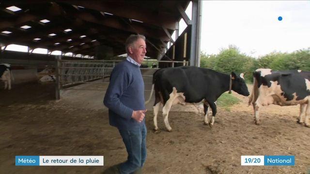 Sécheresse : l'arrivée de la pluie améliora-t-elle la situation des éleveurs ?