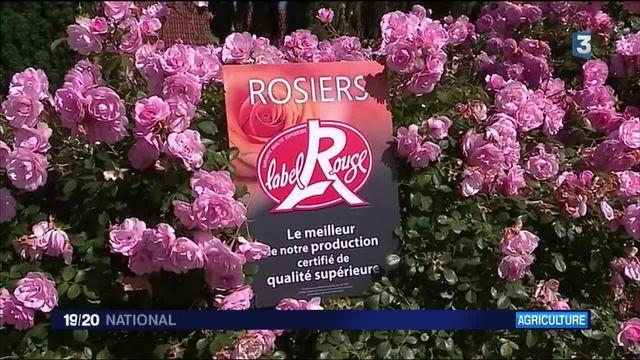 Les roses ont désormais leur Label Rouge