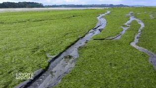 Mesures pour réduire les fuites d'azote ou changement de modèle agricole… quelles solutions au fléau des algues vertes ? (ENVOYÉ SPÉCIAL  / FRANCE 2)