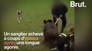"""VIDEO. """"La chasse à l'épieu"""", une pratique cruelle dénoncée par le naturaliste Pierre Rigaux (BRUT)"""