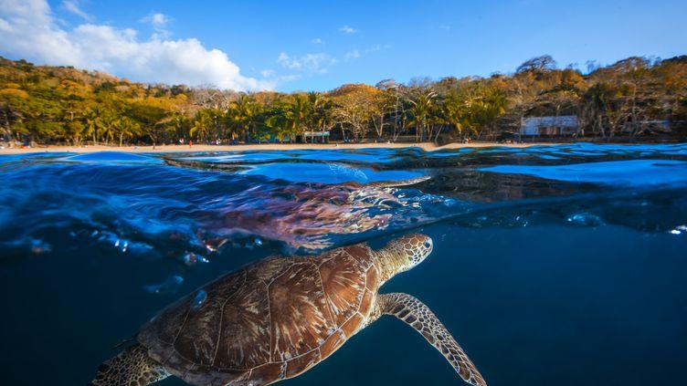 Mayotte, dans l'océan indien est un lieu de ponte pour les tortues de mer. (GETTY IMAGES)