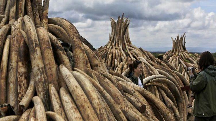 Au total, 16.000 défenses ont été amassées verticalement sur des structures pyramidales en métal dans le parc national de Nairobi. En les brûlant, le Kenya veut donner l'exemple dans la lutte contre le trafic d'ivoire. (Photo AFP/Tony Karumba)